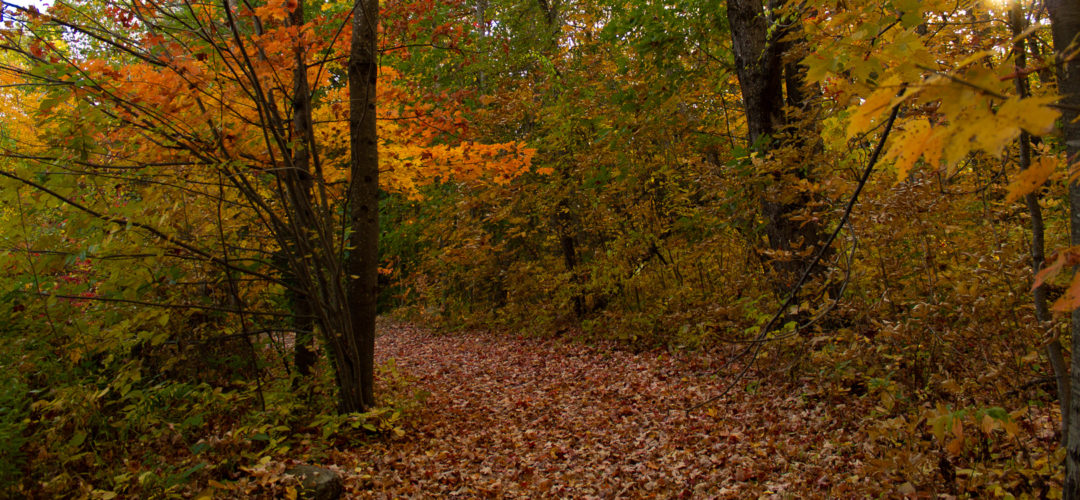 forest with ground covered in fallen leaves