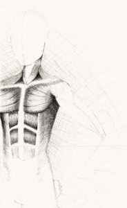 a pen drawing of a figure with an emphasis on the torso muscles below the skin