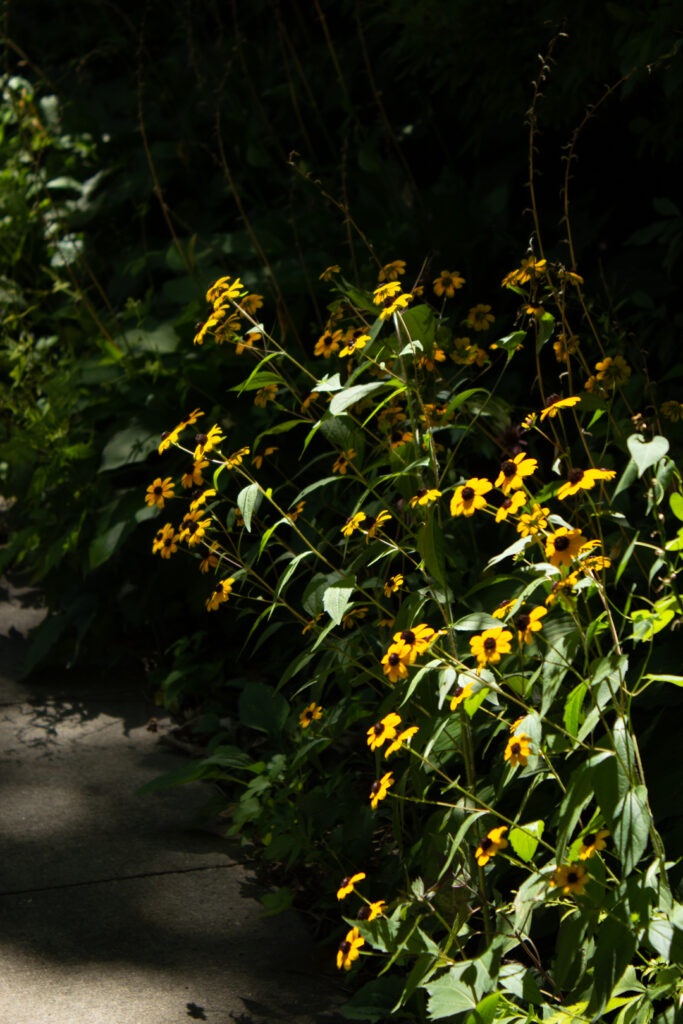 photo of a large group of yellow flowers